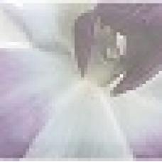Mallol Бордюр Paris Listelo Orquidea Lila 7.5х75